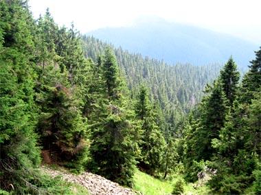 Про ліс говорять